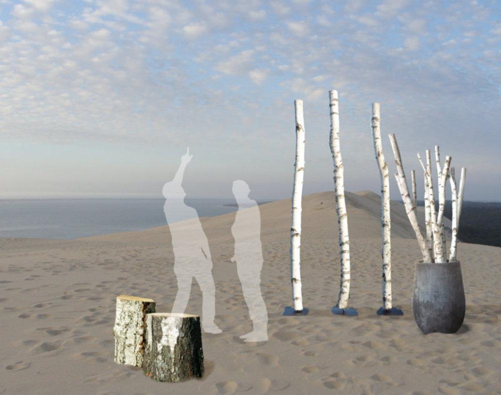 Faire Une Palissade Avec Des Branches troncs de bouleaux
