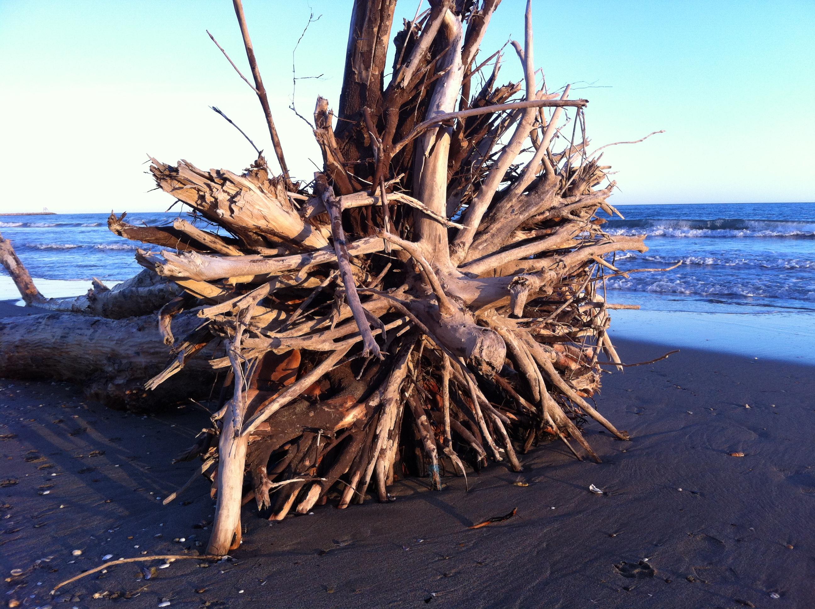 Bois Flotté Pour Pergola driftwood stumps