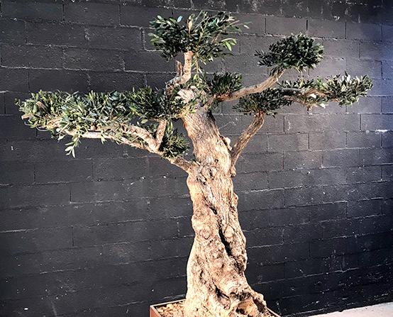 Création d'arbres en végétaux stabilisés