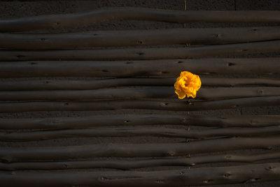 rose sur panneau en bois
