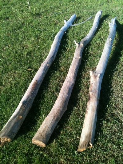 branche de 1m40 à 1m70 en 7 à 10cm de diamètre