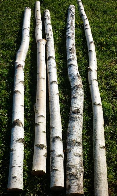 troncs de bouleaux de 2m en 10cm de diametre