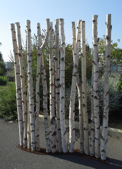 Paravent en S avec des troncs de bouleaux de 2m de hauteur en 5/7cm de diamètre