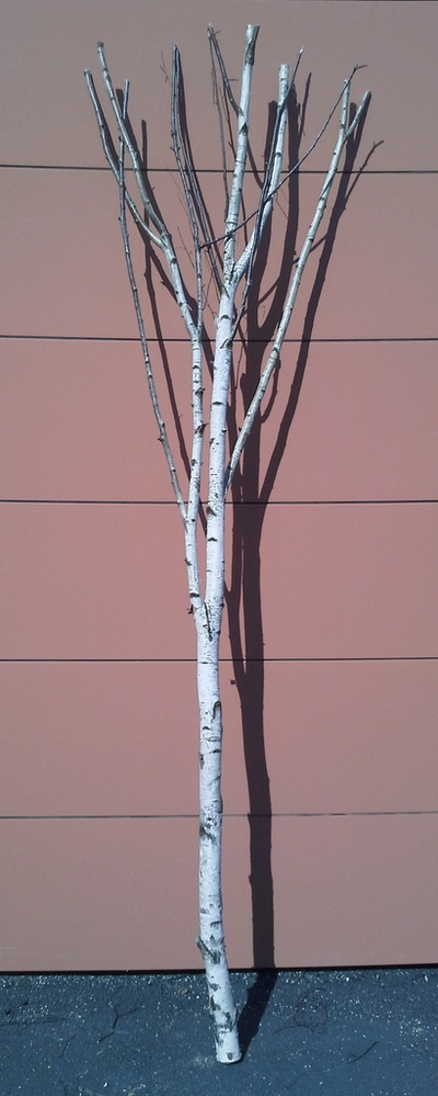 arbre bouleau ref 16