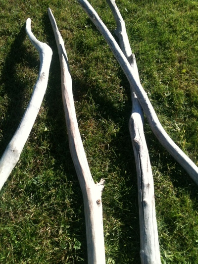 branche de 3m à 4m en 3 à 5cm de diamètre