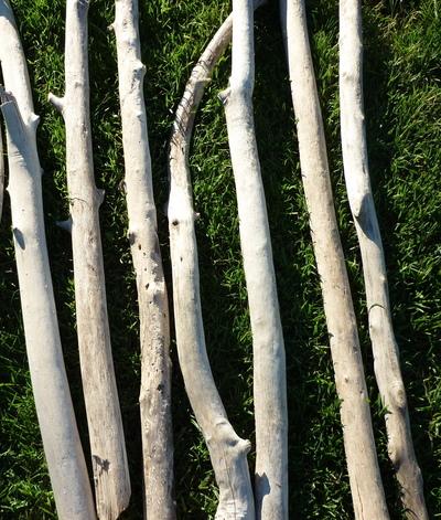 Branche de bois flotté de 50cm à 90cm de longueur et de 2cm à 5cm de diamètre