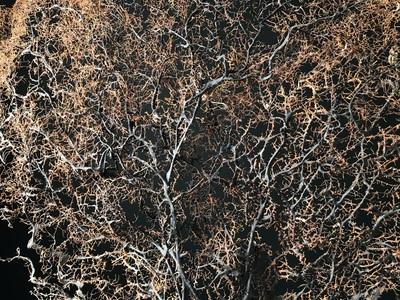 Gorgone noire géante 115cmx110cm