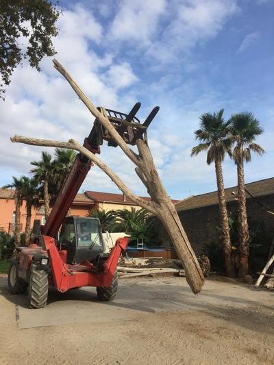 arbre mort en bois flotté ref 6283