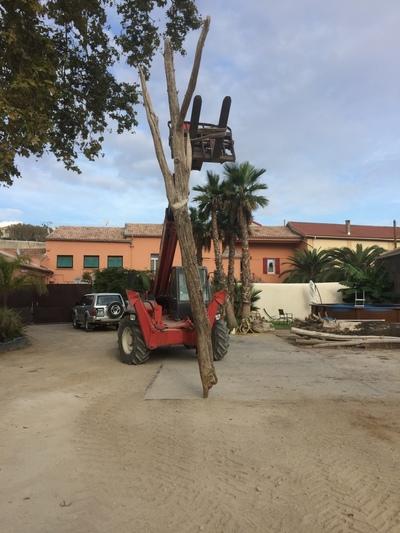 arbre mort en bois flotté ref 6288