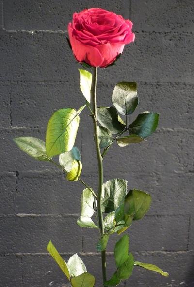 Une rose rouge sur une boule en granit