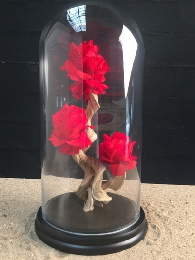 Roses rouge sous globe