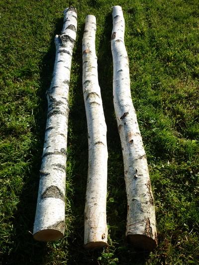 troncs de bouleau de 2m en 15cm de diametre