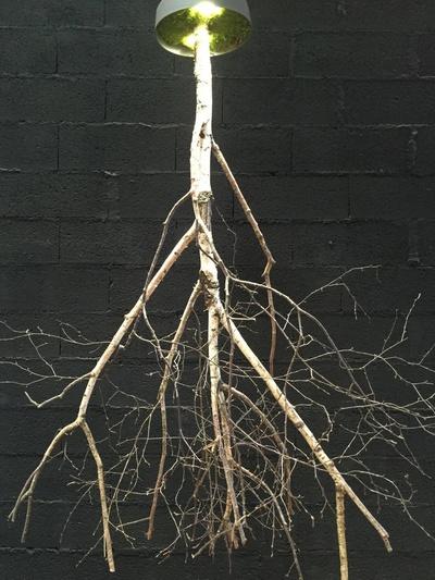 Lustre arbre bouleau