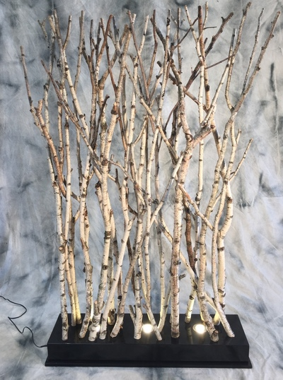 Screen of birchwood birches with spots