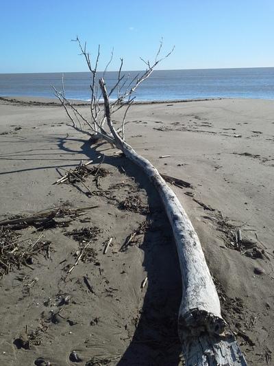 arbre en bois flotté 1 400,00
