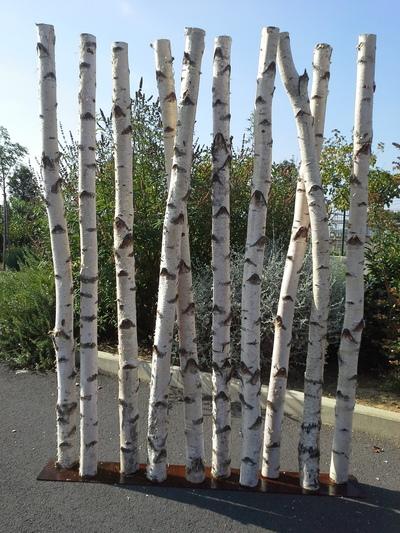 Paravent en troncs de bouleaux de 2m de hauteur en 10cm de diamètre