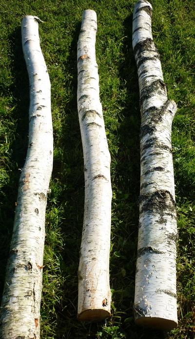 Birchwood trunks 2.5m long and 15cm diameter