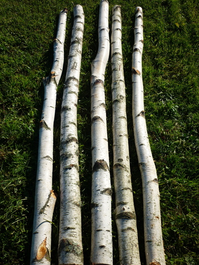 Birchwood trunks 3m long and 10cm diameter