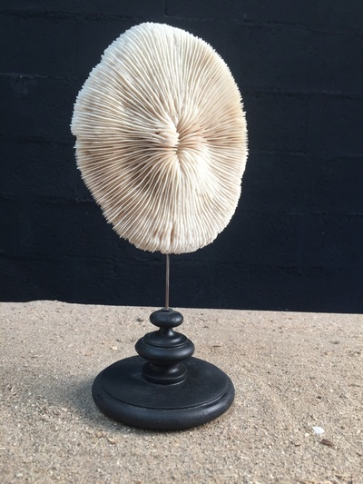 Round slatted coral on base