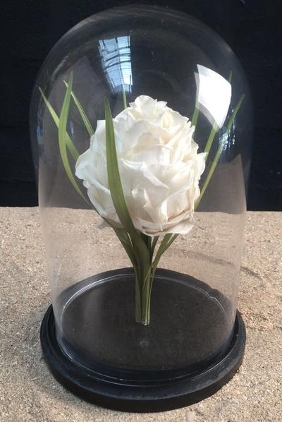 Rose blanche sous globe