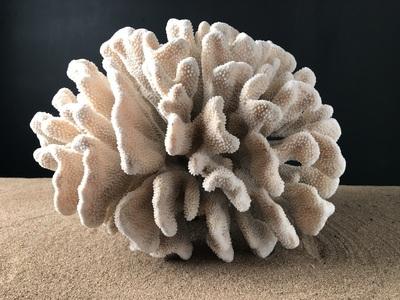 Coral paw cat 47cmx45cm