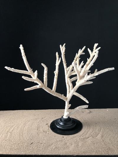 Corail branche 60x60cm