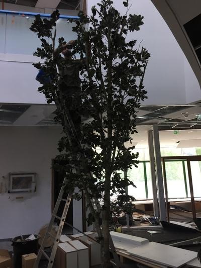 Chêne stabilisé 5m50