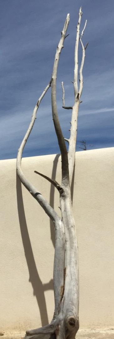 arbre en bois flotté n°1