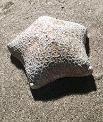 Etoile de mer coussin