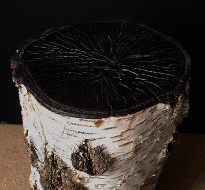 Tabouret en tronc de bouleau et brulé