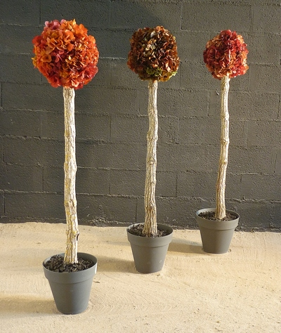Arbuste hortensia orange/rouge