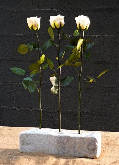 3 roses blanches sur pierre