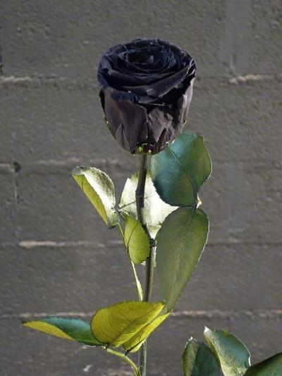 Une rose noire sur colonne en pierre