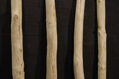 Driftwood trunks cut in half