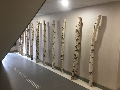 Décoration en troncs de bouleaux à Toulouse